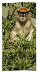 Patas Monkey Beach Sheet by Suzanne Luft