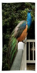 Peacock On A Fence Beach Towel by Jean Noren