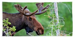 Beach Towel featuring the photograph Peaking Moose by Scott Mahon