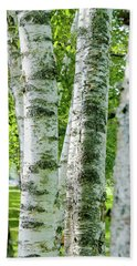 Beach Towel featuring the photograph Peek A Boo Birch by Greg Fortier