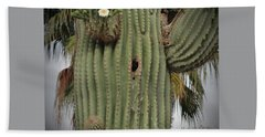 Peek-a-boo Cactus Wren Beach Sheet