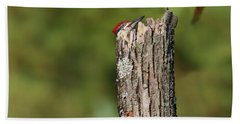 Peek A Boo Pileated Woodpecker Beach Towel
