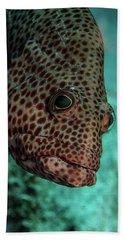 Peeking Coney Beach Sheet by Jean Noren