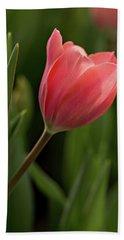 Beach Towel featuring the photograph Peeking Tulip by Mary Jo Allen