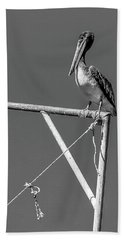 Pelican In Black And White Beach Towel by Andy Crawford