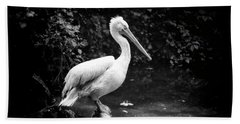 Beach Sheet featuring the photograph Pelican by Traven Milovich