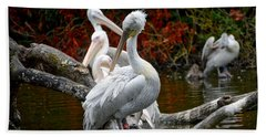 Pelicans Beach Towel
