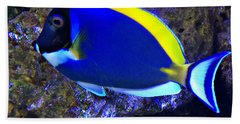 Blue Tang Fish  Beach Towel