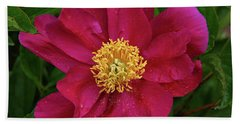 Beach Towel featuring the photograph Peony In Rain by Sandy Keeton