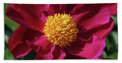 Beach Towel featuring the photograph Peony Pixie Dust by Rachel Cohen