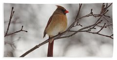 Perched Female Red Cardinal Beach Towel