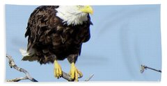 Perched On A Tree Beach Towel