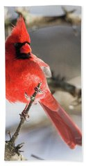Perching Mister Cardinal Beach Towel
