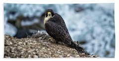 Peregrine Falcon - Here's Looking At You Beach Sheet