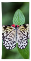 Beach Towel featuring the photograph Perfect Butterfly Pose by Raphael Lopez