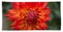 Perfectly Dahlia Beach Towel