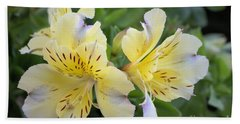 Peruvian Lily 2 Beach Towel