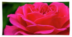 Petals Of A Bright Pink Rose Beach Sheet by Teri Virbickis