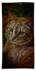 Pets Fat Cat Portrait 2 Beach Towel