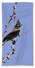 Phainopepla Beach Sheet