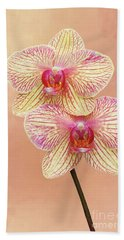Phalaenopsis Moth Orchids #2 V2 Beach Towel