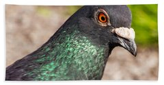 Pigeon Portrait Beach Sheet