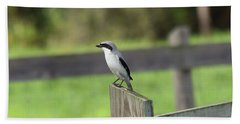 Pigeon-toed Shrike Beach Sheet