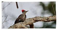 pileated Woodpecker 1068  Beach Sheet by Michael Peychich