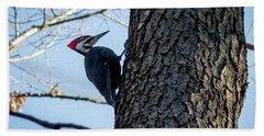 Pileated Woodpecker  Beach Sheet