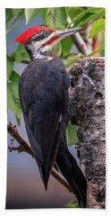 Pileated Woodpecker Beach Towel
