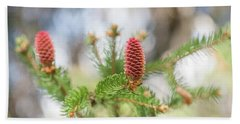 Pine Cones In Spring Time Beach Towel