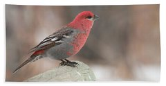 Pine Grosbeak Beach Sheet