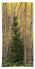 Pine Tree Among Aspens  4874 Beach Sheet
