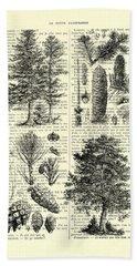 Pine Trees Study Black And White  Beach Towel