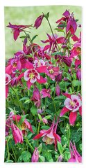 Beach Towel featuring the photograph Pink And White Columbine by Sue Smith