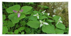 Pink And White Trillium Beach Sheet by Alan Lenk