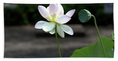 Pink And White Water Lily With Green Pod Beach Towel