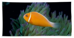 Pink Anemonefish Beach Towel
