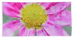 Pink Aster Flower With Raindrops Beach Sheet