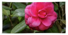 Pink Camelia 02 Beach Towel by Gregory Daley  PPSA