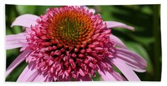 Pink Coneflower Close-up Beach Sheet