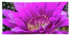 Beach Towel featuring the photograph Pink Echinopsis Bloom  by Saija Lehtonen