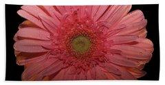 Pink Gerbera Daisy  Beach Towel