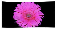 Pink Gerbera On Black Beach Sheet by Linda Bianic