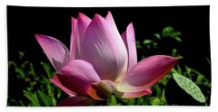 Pink Lotus  Beach Towel by Jeannie Rhode