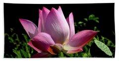 Pink Lotus  Beach Sheet by Jeannie Rhode