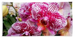 Pink Moth Orchids Beach Towel