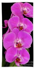 Pink Orchid Against A Black Background Beach Towel