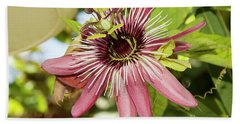 Pink Passiflora Beach Sheet by Elvira Ladocki