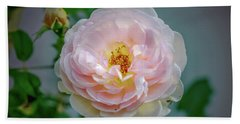 Pink Rose #c3 Beach Sheet by Leif Sohlman
